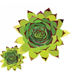 Tropical green flower vector image