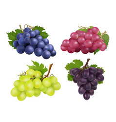 Realistic grapes set various grape vector