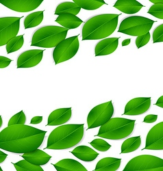 realistic green leaves isolated texture on white vector image