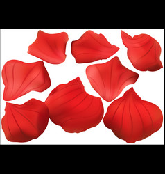 red rose petal collection vector image