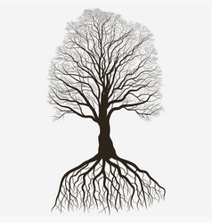 Tree silhouette with root system black bare oak vector