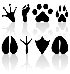 footprint collection vector image