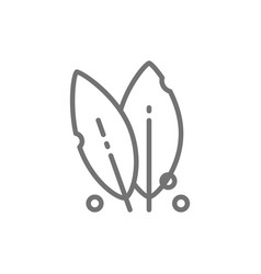 Bay leaf spice herb line icon vector