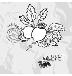 Hand drawn whole and sliced beet vector