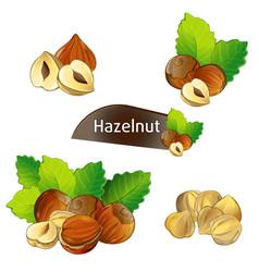 Hazelnut kernel with green leaves set vector