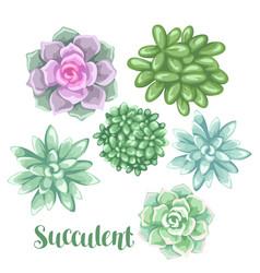 Set of succulents echeveria jade plant vector