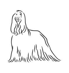 Sketch black dog afghan hound breed vector