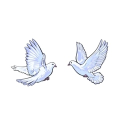 Two free flying white doves isolated sketch style vector image