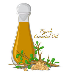 Essential oil myrrh vector