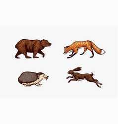 forest animals bear grizzly and red fox hare vector image