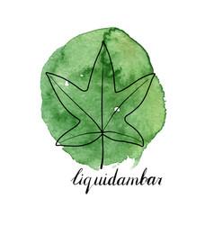 Leaf of liquidambar tree vector