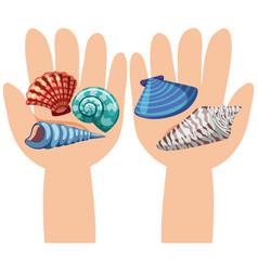 Seashells on human hands vector