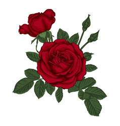 Beautiful bouquet with red roses and leaves vector