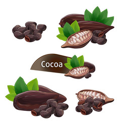 cocoa pod in nutshell with leaves set vector image