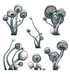 Cramped toadstool mushrooms composition collection vector