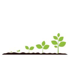 Infographic planting tree seedling gardening vector