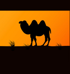 silhouette camel on the background sunset vector image