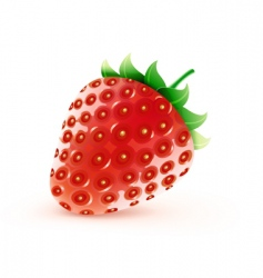 sweet strawberry vector image
