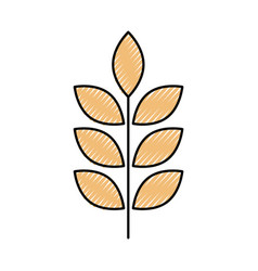 Wheat or barley ears branch grains harvest on vector