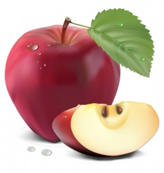 apple and leaf vector image