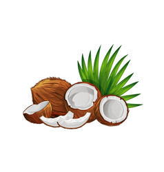 Coconut with half and green palm leaves set vector