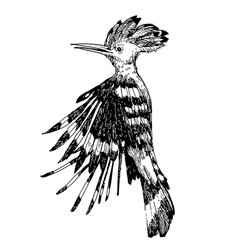 Hoopoe bird doodle hand drawn vector
