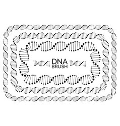 Human dna chain or genome helix molecule vector