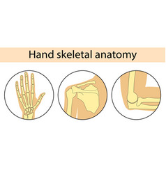 Human hand skeleton vector