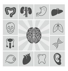 Human organs thin line and silhouette icons vector