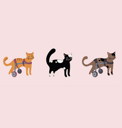 set of disabled cats in wheelchair vector image vector image