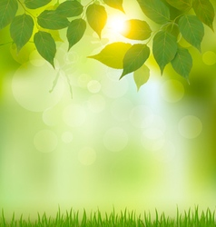 Summer nature background with green leaves vector image