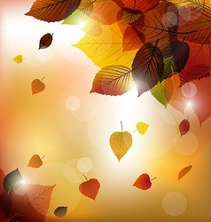 Autumn leafs background vector