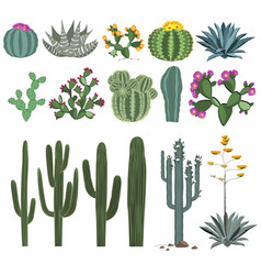 cactus and succulent set vector image