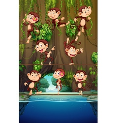 Monkeys climbing on vine vector