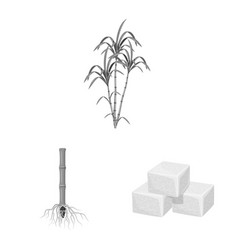 Sugarcane and cane sign vector