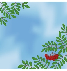 Background with rowanberry on sky vector image