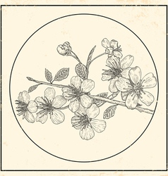 Cherry vintage black vector image