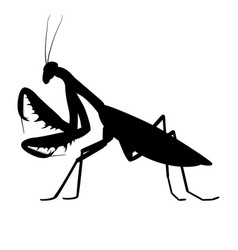 Black silhouette a mantis vector