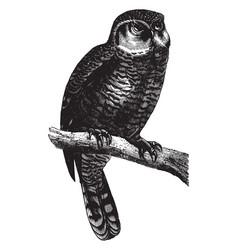 Canada owl vintage vector
