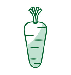 Carrot vegetable healthy food vector