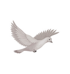 Dove in flying with wide open wings bird with vector