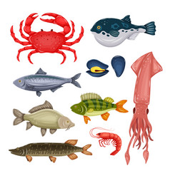 Seafood set with crab fish mussel and shrimp vector