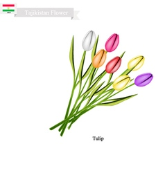 Tulip Flowers The Famous Flower of Tajikistan vector