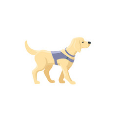 labrador guide dog for blind people vector image