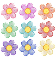 Nine colorful flowers vector