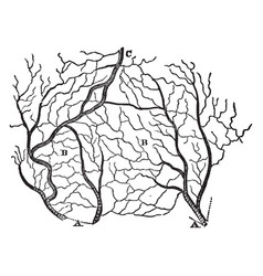 Arteries and veins of a section of the skin vector