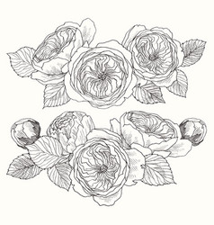 Blooming flower hand drawn botanical blossom vector