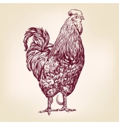 Chicken hand drawn realistic vector