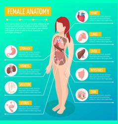 female anatomy isometric poster vector image