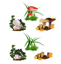 set of mushrooms isolated on white background cut vector image